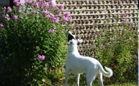 Checking out our garden.