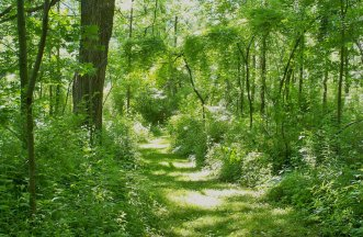 Quiet woodland paths beckon.